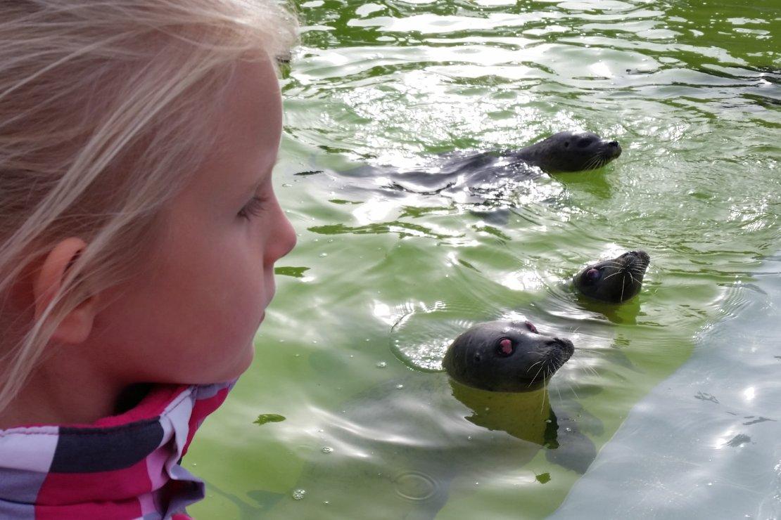 Ecomare op Texel bekommert zich om de zeehonden