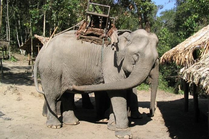 Olifant Thailand 2